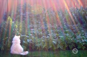 G. Q. at the garden
